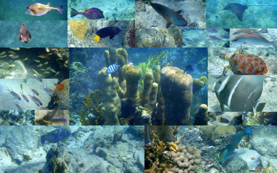 Fish, Turtles, rays, coral